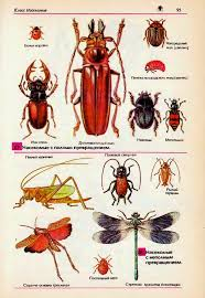 Многообразие насекомых их роль в природе и жизни человека  Разнообразие насекомых