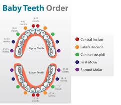 Teething Chart For Babies Baby Teeth Order Chart Kids And Babies Pinterest Baby Teeth