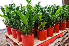 indoor plants that crave low light