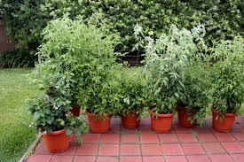 12 Inspiring Square Foot Gardening PlansIdeas For Plant Spacing Container Garden Plans Tomatoes