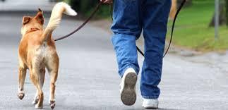 Resultado de imagem para passear cães