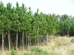 Resultado de imagen para inversiones forestales