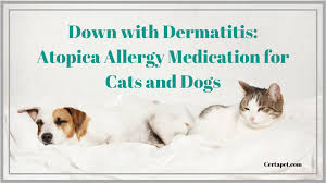 Down With Dermatitis Atopica Allergy Medication For Cats