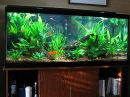 Fish Tank Accessories And Decorations Tips on Choosing Your Fish Tank Decorations ComfortHousepro 86