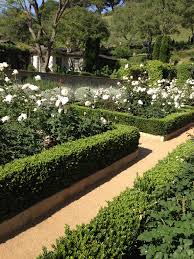 Small Picture White Roses and box hedge For Outside Pinterest White roses