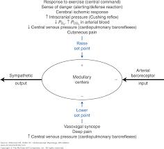 Chapter 9 Regulation Of Arterial Pressure Cardiovascular
