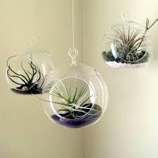 hanging air plant terrariums set hanging air plant holder globe inch indoor garden inch terrarium in hanging air plant
