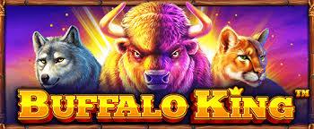 Buffalo King Betting Rules - SBOTOP Information Center