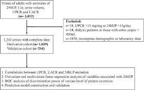 Urine Flow Volume Chart Study Flow Chart Abbreviation 24hup 24h Urine Protein