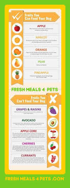 5 Fruits Good For Your Dog To Eat