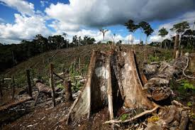 deforestation short essay bissoy education  bad harvest soil erosion extinction of wild animals greenhouse effects are the problems prevailing owing to deforestation it is global problem
