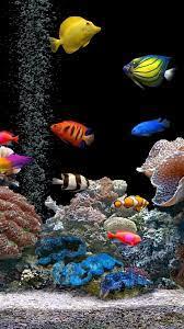 Elegant Fish Live Wallpaper Data Src ...