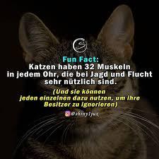 Katzen Sind Hochentwickelt Quelle