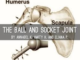 ball and socket joint. the ball and socket joint ball and socket joint