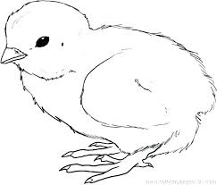 Chicken Coloring Pages Download Free Printable And Coloring Pages
