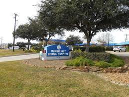 marina bay animal hospital january business landscape of the month
