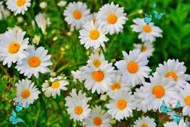 flower wallpaper hd 1080p for mobile