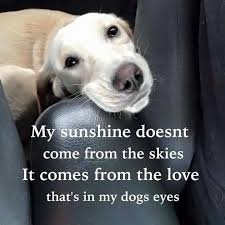 Cute Dog Quotes 23 Amazing 24 Best Boston's R The Business Images On Pinterest French
