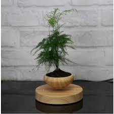 office bonsai. Office Desk Air Bonsai Decoration Maglev Plant Pots