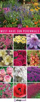 how to plant a flower garden. 20 Of The Best Sun Perennials For Your Garden. Flower Garden DesignFlower GardeningFlower How To Plant A