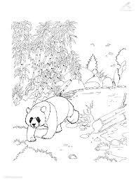 Panda Bear Coloring Pages - GetColoringPages.com