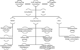 Organizational Structure Of The Lilac Cohort Describes The