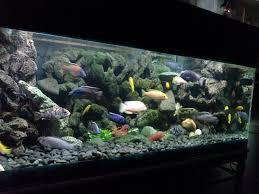 Diy 3d Aquarium Background Styrofoam Clublilobal Com