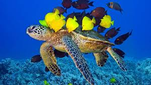Turtle with fish on the ocean floor ...