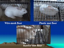 effect of cage floor type on performance of growing rabbits