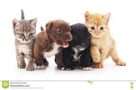 kittens and puppies.  And Kittens And Puppies On A White Background Throughout And Puppies