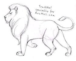 easy lion drawings in pencil.  Drawings How To Draw A Lion Step By 4 With Easy Lion Drawings In Pencil C