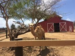 animal garden. Aruba Fauna Tour Animal Garden
