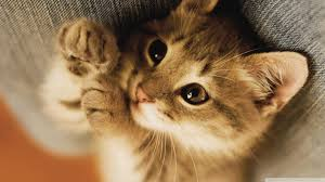 cute kittens wallpapers for mobile. Modren For Cute Kittens Wallpapers For Mobile 1024768  Pictures Of 68 Wallpapers  Adorable To P