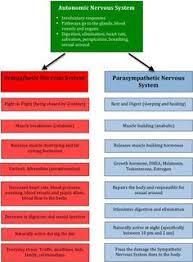 Sympathetic Vs Parasympathetic Nervous System Chart Nurse