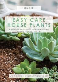 Low-Maintenance Houseplants | Easy Care House Plants | Indoor Gardening |  Best Starter Plants