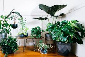 house plants. Set Up A Welcoming Committee House Plants