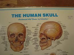 The Human Skull Anatomical Art Series Medical Chart