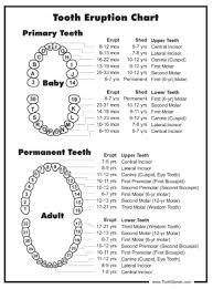 Canine Tooth Eruption Chart Faqs Upstate Pediatric Dentistry