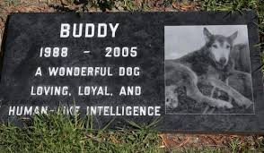 Best 25 Urns For Pets Ideas On Pinterest  Urns For Cremation Dog Burial Backyard