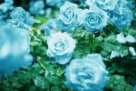 blue flowers background tumblr. Modren Background Flowers Images Blue Flower Wallpaper And Background Photos With Blue Background Tumblr O