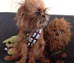chewbacca dog costume