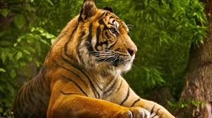 Most Beautiful Animals Wallpapers on ...