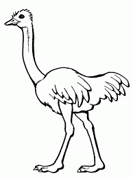 Small Picture Ostrich Coloring Pages Ostrich Coloring Pages Pinterest Free