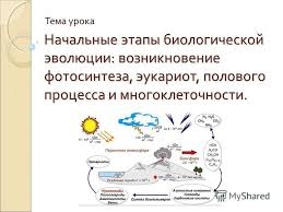 Реферат На Тему Эволюция Биология Скачать Реферат На Тему Эволюция Биология