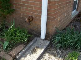 downspout drainage pipes