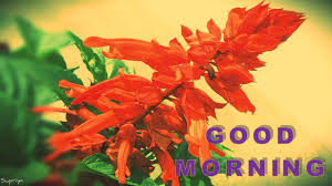 Good Morning Sms Video Good Morning Message Good Morning Sms