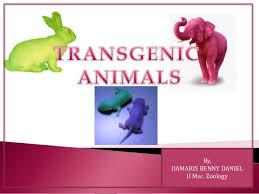 Transgenic Animals Transgenic Animals