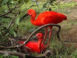 نتیجه تصویری برای در اعماق جنگل ابر اکوادور