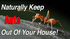 knowing the ants in your house