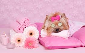 Image result for doggie spa
